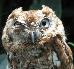 Not-Sleeping-Owl's Profile Picture