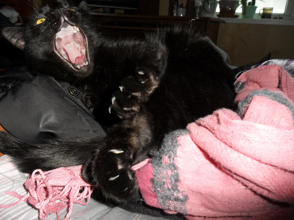 Midnight yawns by Not-Sleeping-Owl