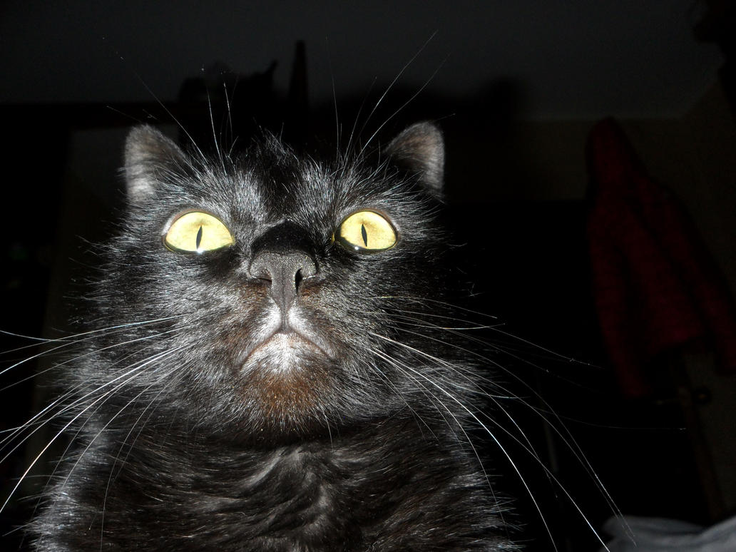 astonishment by Not-Sleeping-Owl