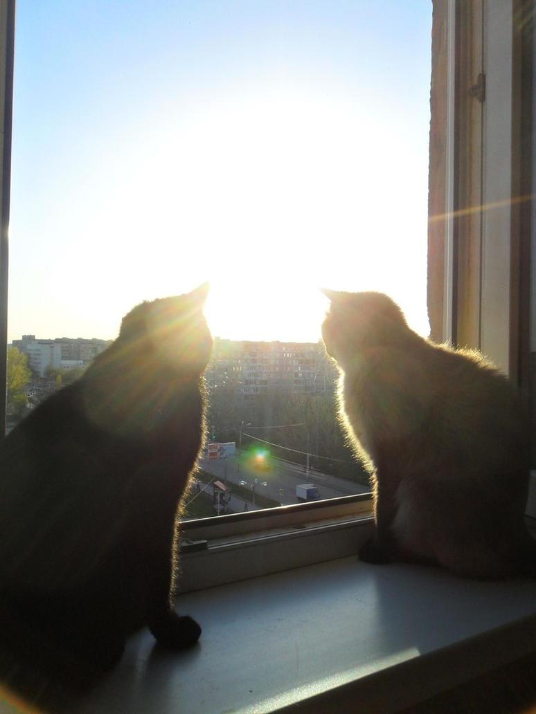 sunlight by Not-Sleeping-Owl