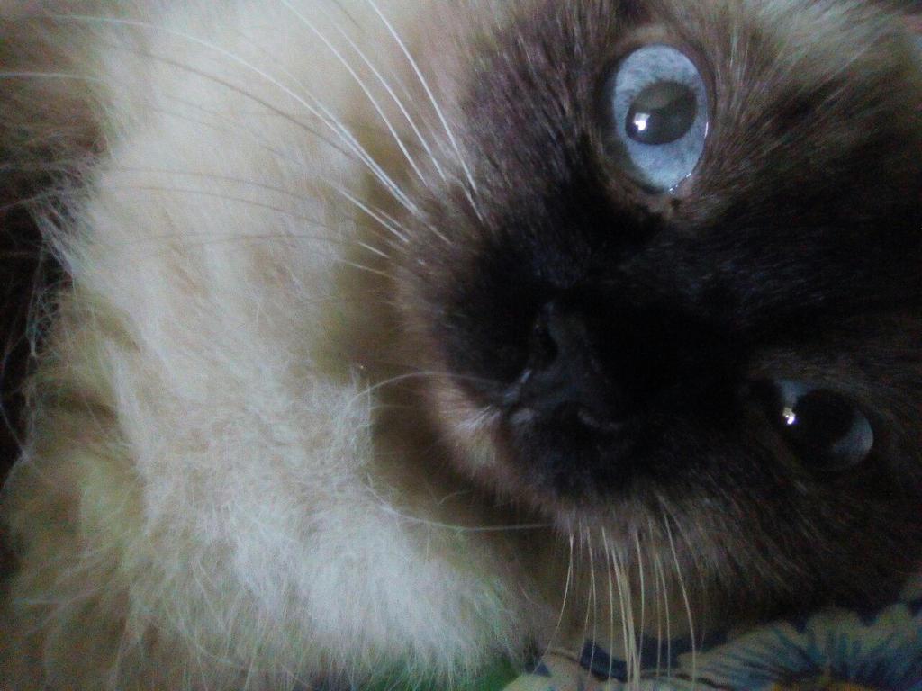 Sky-blue eyes by Not-Sleeping-Owl