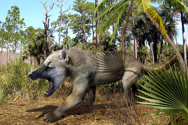 Amphicyon-ingens reconstruction by rathacat
