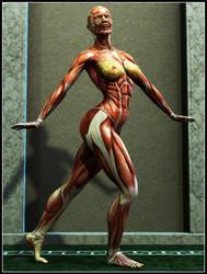 Anatomy by CyonixGFX