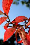 Autumn Pink by palandir-anann
