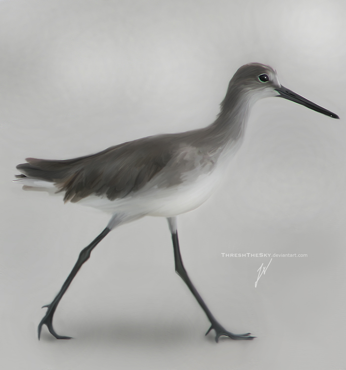 Shorebird by ThreshTheSky
