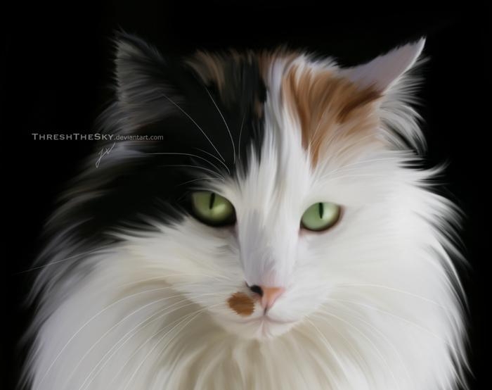Comically Fluffy by ThreshTheSky