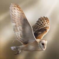Flight of a Ghost
