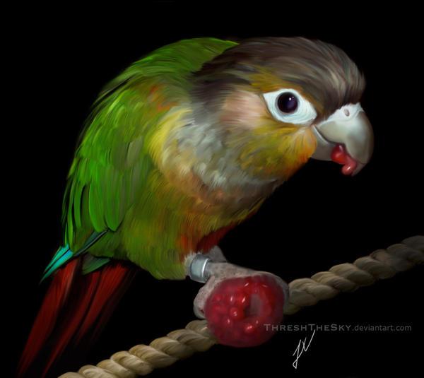 Parrot Om Nom Nom by ThreshTheSky