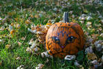 Felis Pumpkinus