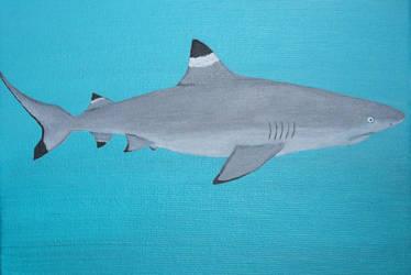 Blacktip reef shark by Catonia
