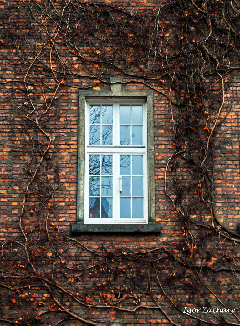 The Window is everything! by IgorZachary