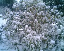 Snowy Day by KankurouOfTheSand
