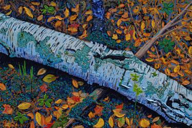 Fallen Birch Microcosm by mothandashes