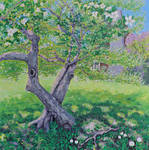 Under an Apple Tree in Spring