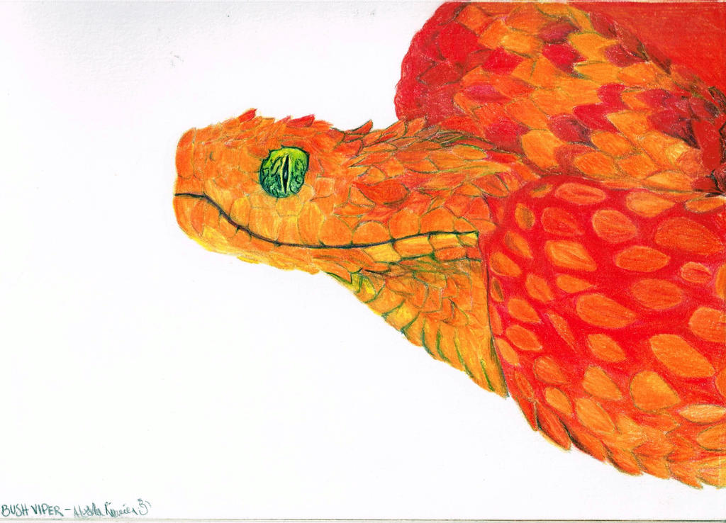 Red Bush Viper by RainMoon11 on DeviantArt