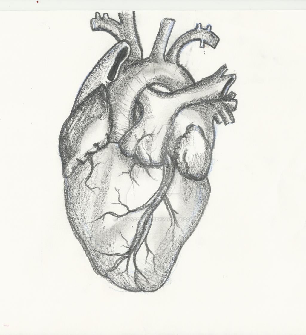 human heart by brunacobres on deviantart, Muscles