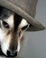 Dog in a Hat by TigerLily2010