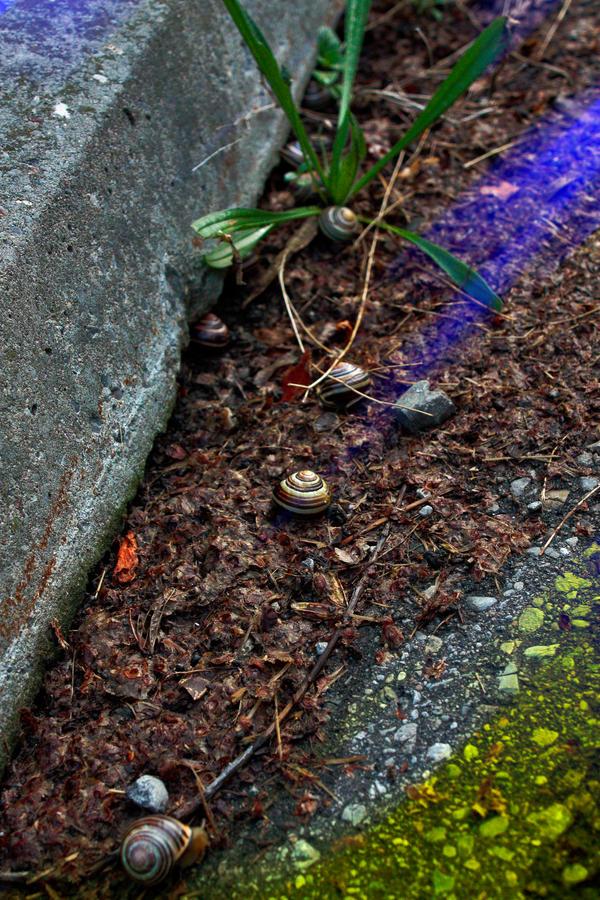 Snail magic