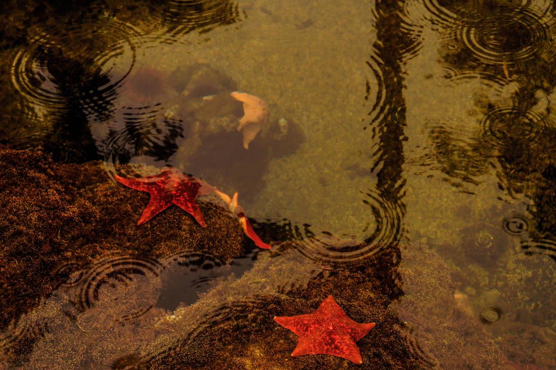 Starfish by praline815