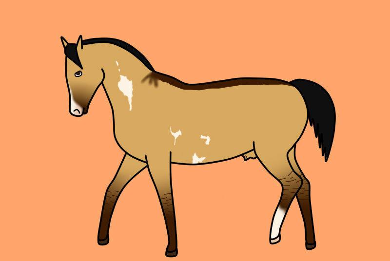SKS 3832 Phanes - Best Stallion Title
