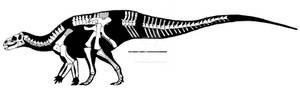 Tenontosaurus dossi skeletal restoration