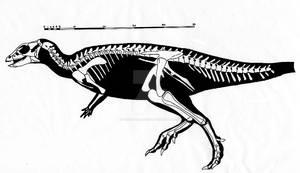 Skeletal restoration of Haya griva