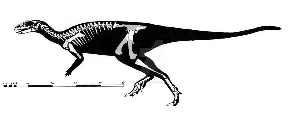 Changchunsaurus parvus skeletal reconstruction by ornithischophilia