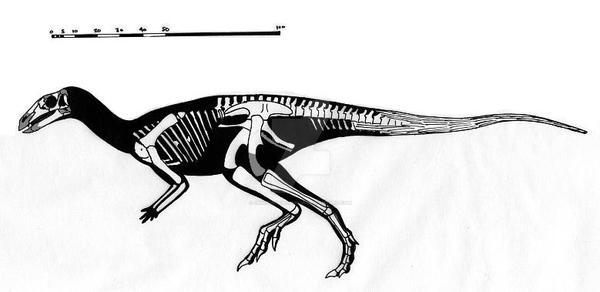 Parksosaurus warreni skeletal reconstruction
