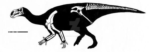 Altirhinus kurzanovi skeletal reconstruction