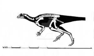 Orodromeus makelai skeletal reconstruction