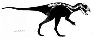 Manidens condorensis skeletal reconstruction