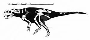 Psittacosaurus sibiricus skeletal reconstruction