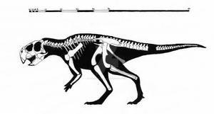 Psittacosaurus sinensis skeletal reconstruction