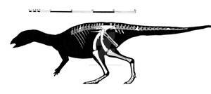Gideonmantellia amosanjuanae skeletal reconstructi