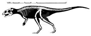 Yinlong downsi skeletal reconstruction