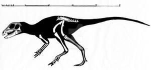 Abrictosaurus consors skeletal restoration
