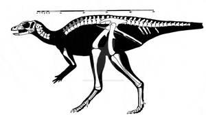 Jeholosaurus shangyuanensis skeletal reconstructio