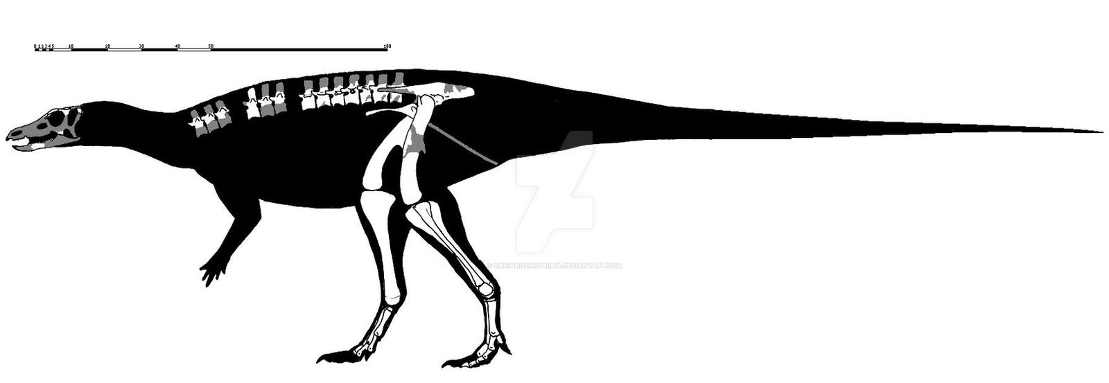 Thescelosaurus assiniboiensis skeletal reconstruct