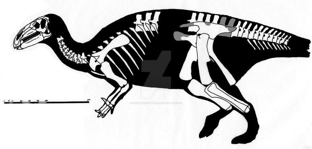 Jinzhousaurus yangi skeletal reconstruction