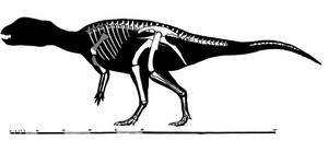 Stenopelix valdensis skeletal restoration