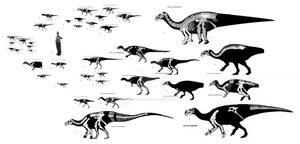 Ornithischian Size Comparison
