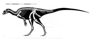 Hexinlusaurus multidens Skeletal Restoration
