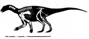 Koreanosaurus boseongensis Skeletal Restoration