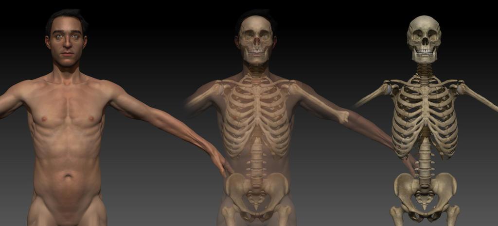 Anatomy work in progress by gkorniluk