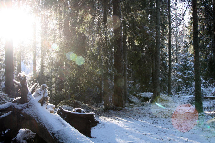 Breaking Through The Winter. by InnerLife