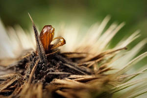 Leere Huelse auf vertrockneter Blume