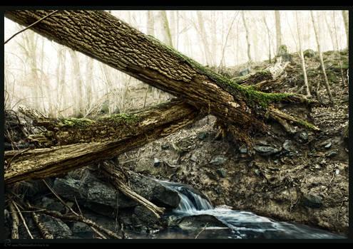 crossing trunks over runnel