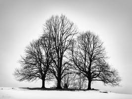 3 trees solitaire group b/w