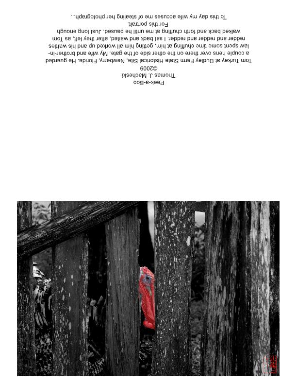 Peek-a-Boo GreetingCard HalfFold Landscape-page001 by madshutterbug