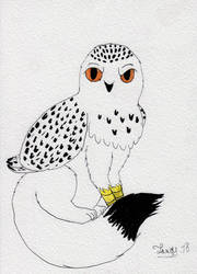 snowly owl cat by Jonas-D